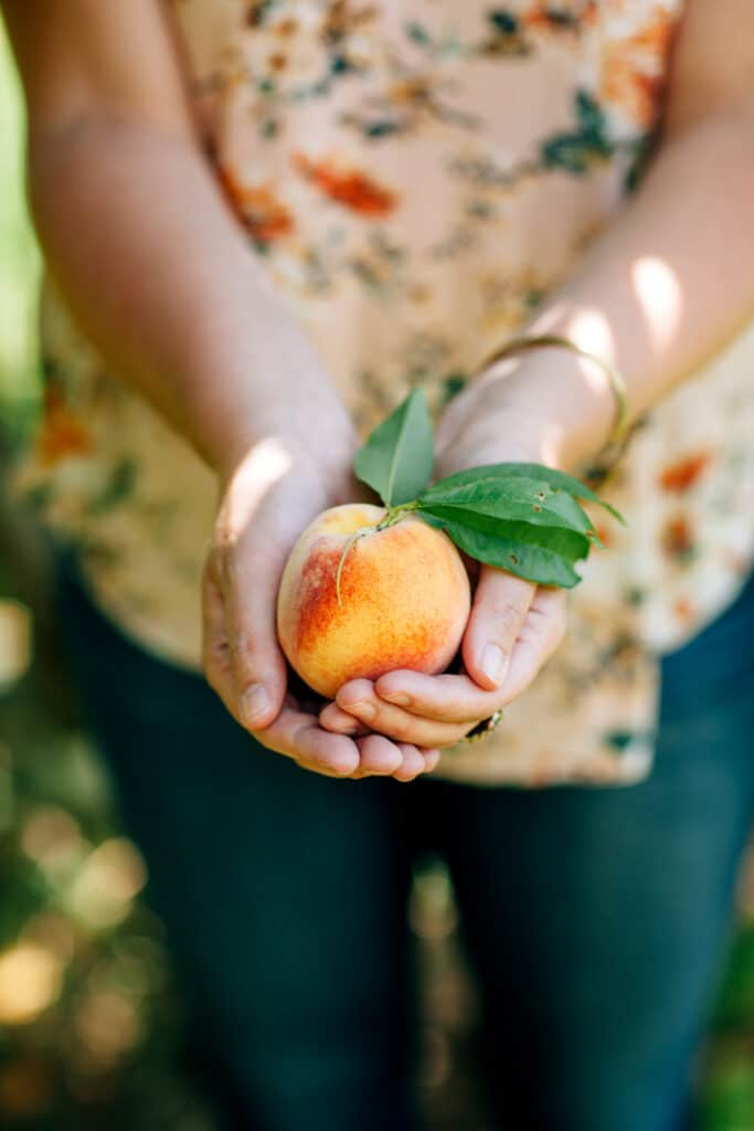 A woman's hands holding one peach.