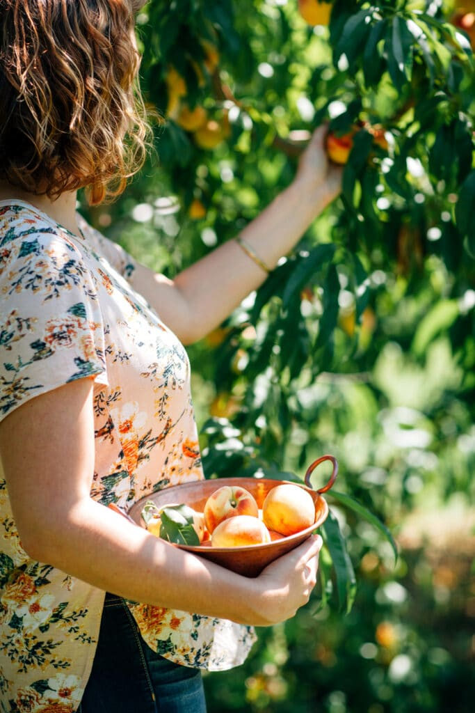 A woman with red hair wearing a flowered shirt picking peaches.